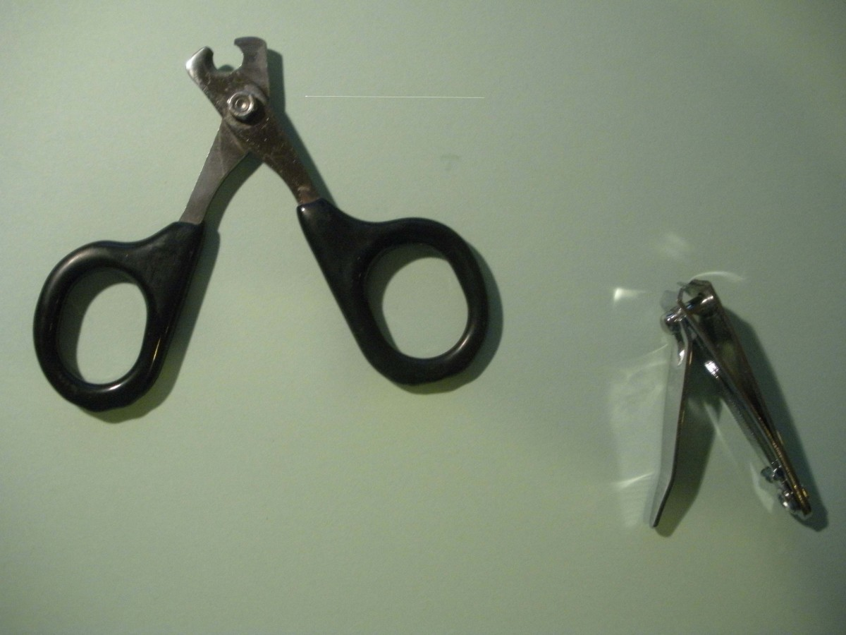 Left: kitten claw trimmers, right: nail trimmers for humans; best used on adult cats