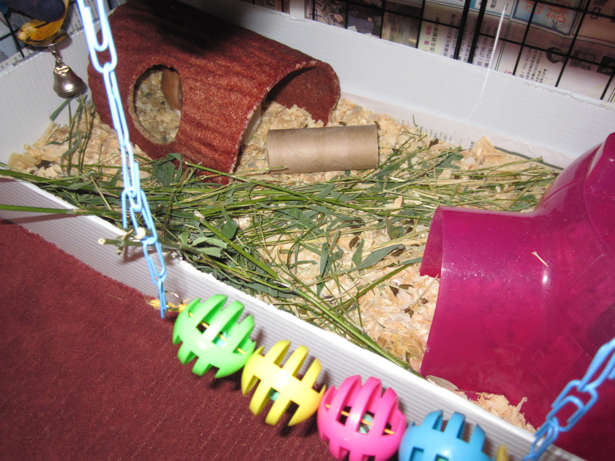 The bedding in this picture is pine chips, the chewing log and pigloo is to provide more dark area.  There is also hay and bamboo inside the area.