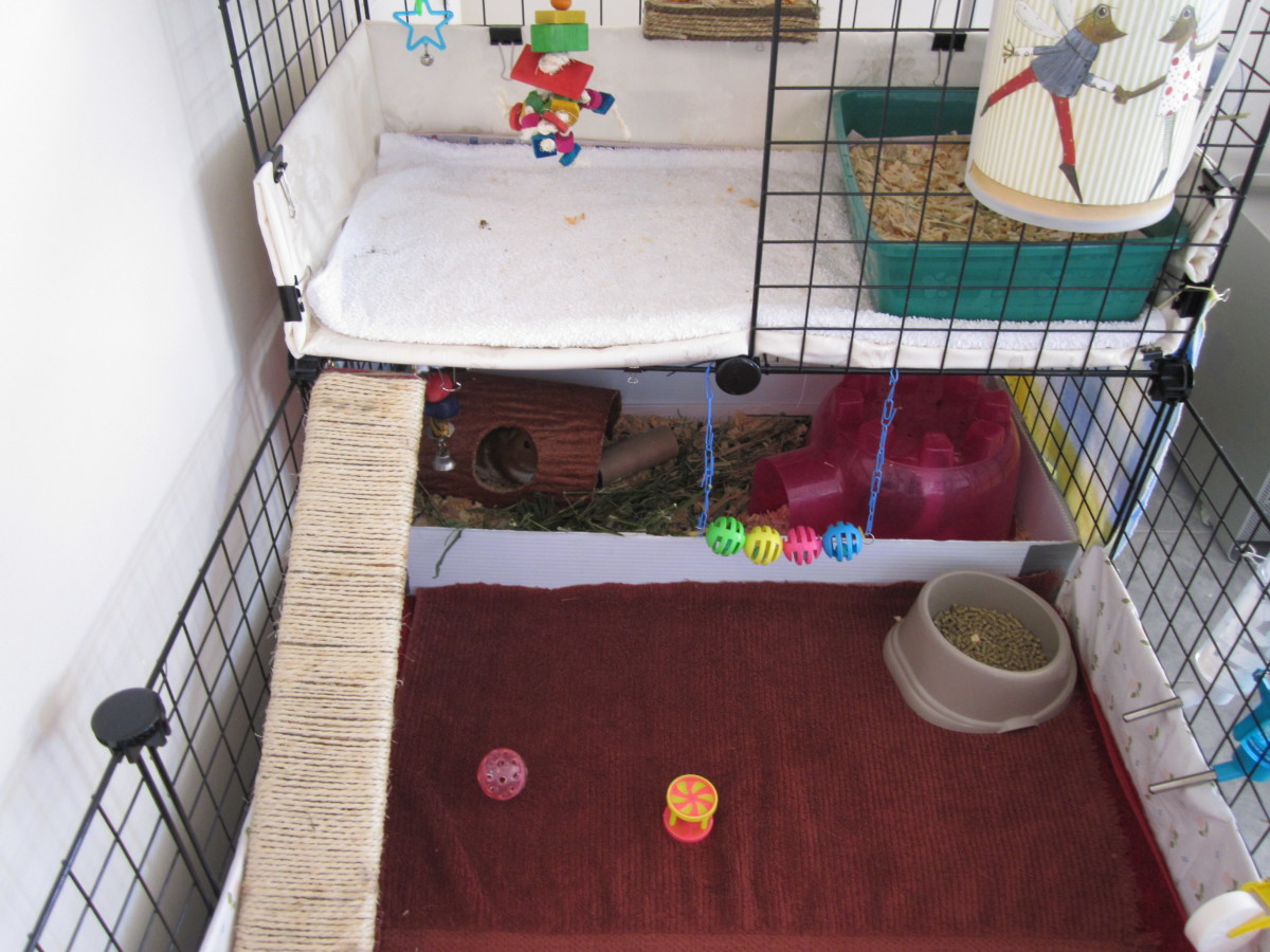 This is how it usually looks, although some days there will be wood chips outside if they kick or popcorn like crazy. The top is a bit dirtier, since we use that area to house them as we clean up.