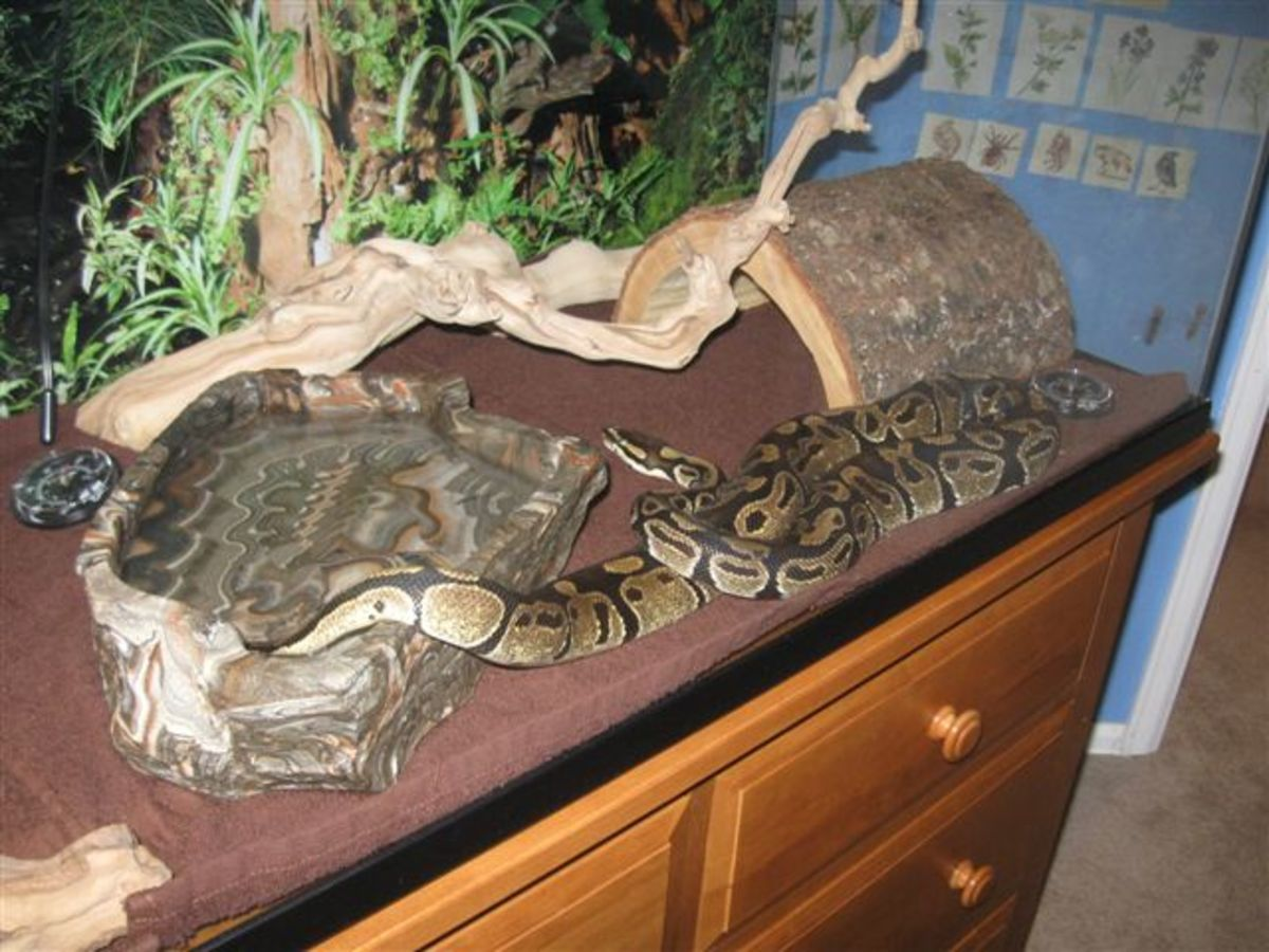 A nicely decorated tank with fake plants and a log hide for the snake to feel comfortable in.
