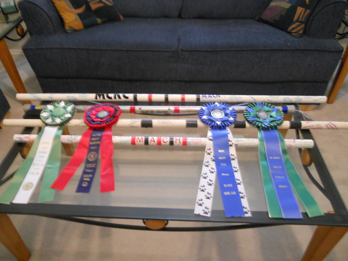 Four MACH bars with MACH ribbons from AKC agility dog competitions.