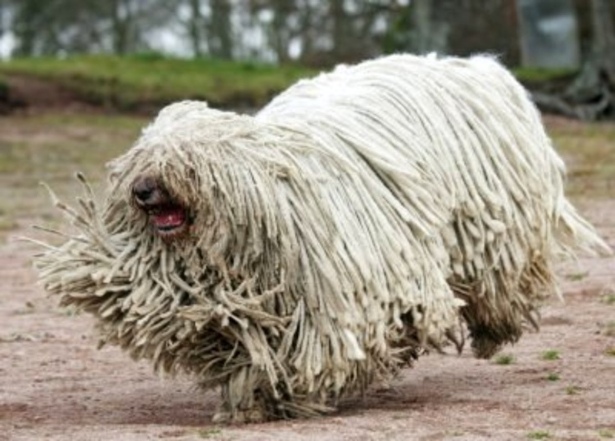 top-10-ugliest-dog-breeds