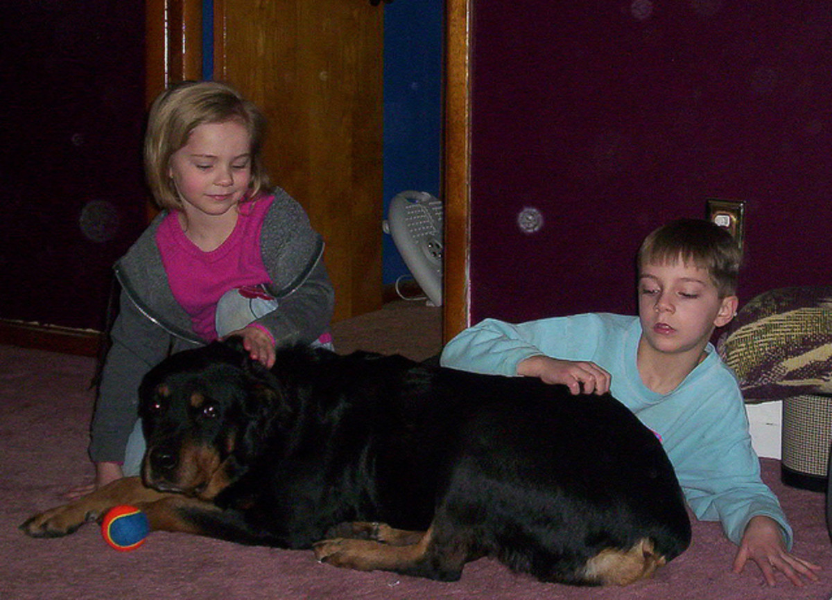 A Rottweiler  with her family.
