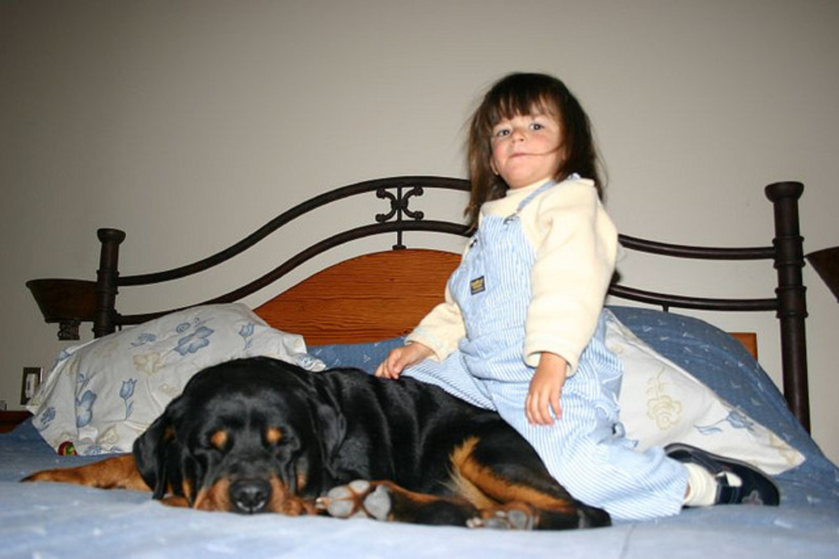 The Rottweiler is the best family watch dog.