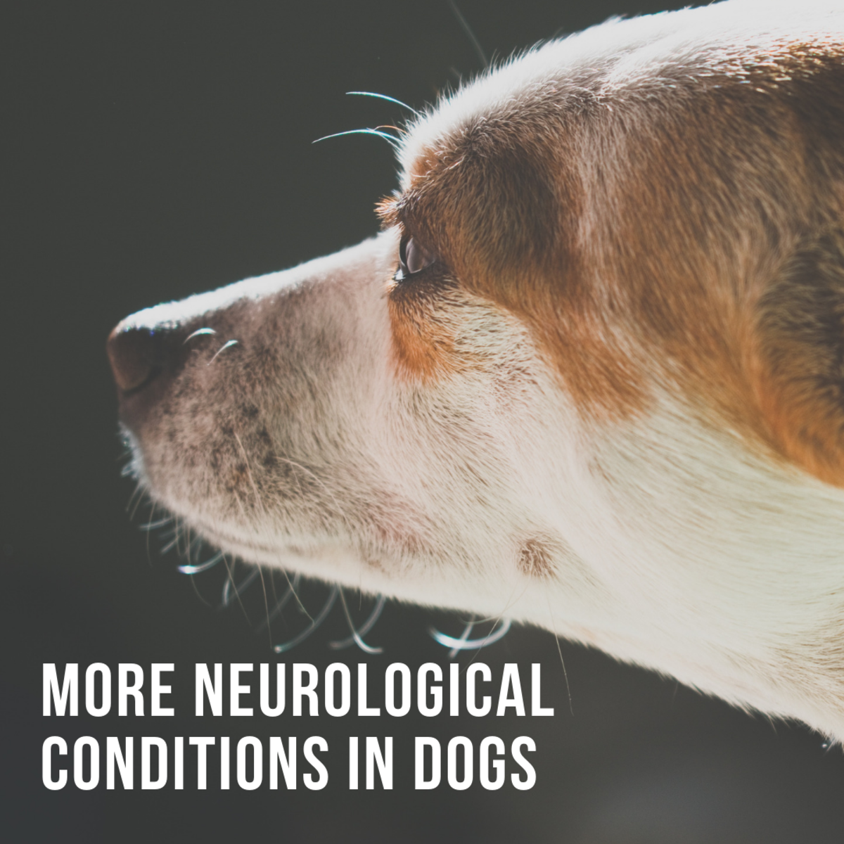 More Neurological Conditions in Dogs
