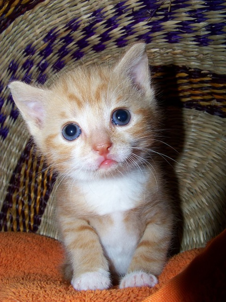 Kittens who are kept together can spread viruses to each other.
