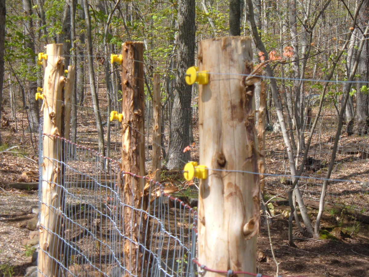 An electric fence helps to protect the goat pen