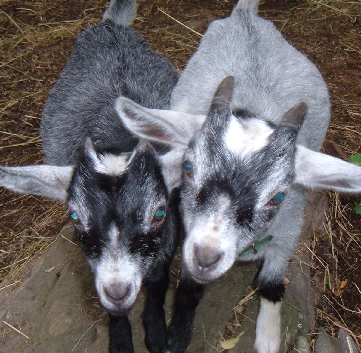 """Say """"Hi"""" to Delilah and Oliver"""