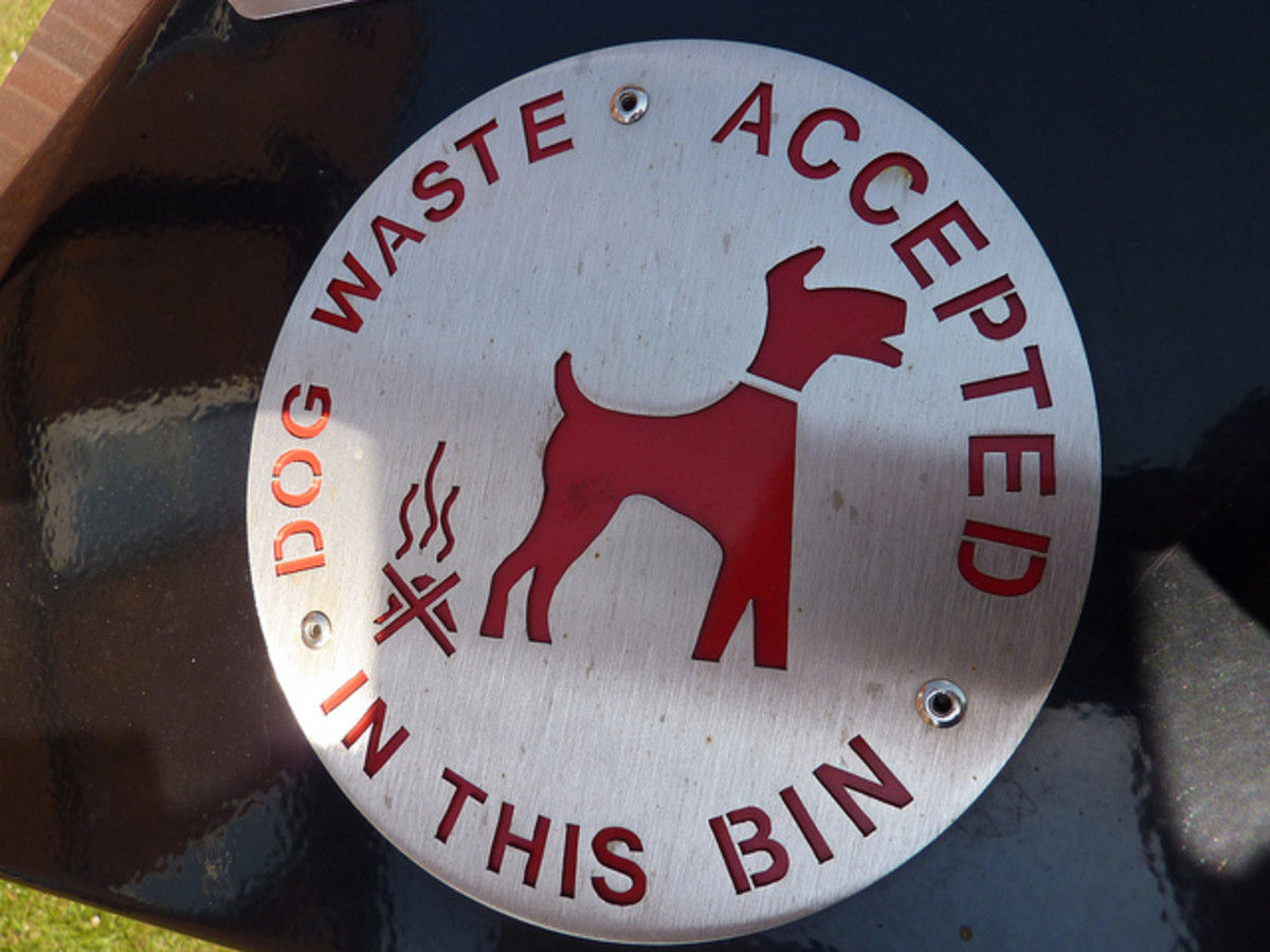 Dog poop should not be thrown in a bin and ignored. The problem is yours.