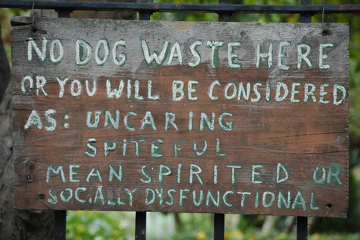 Do something about your dog´s poop.