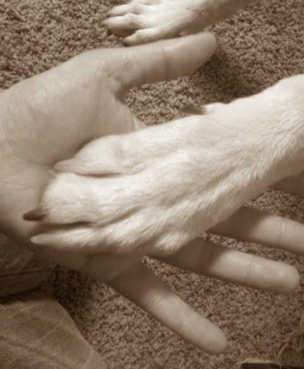 Dezzy's got big paws