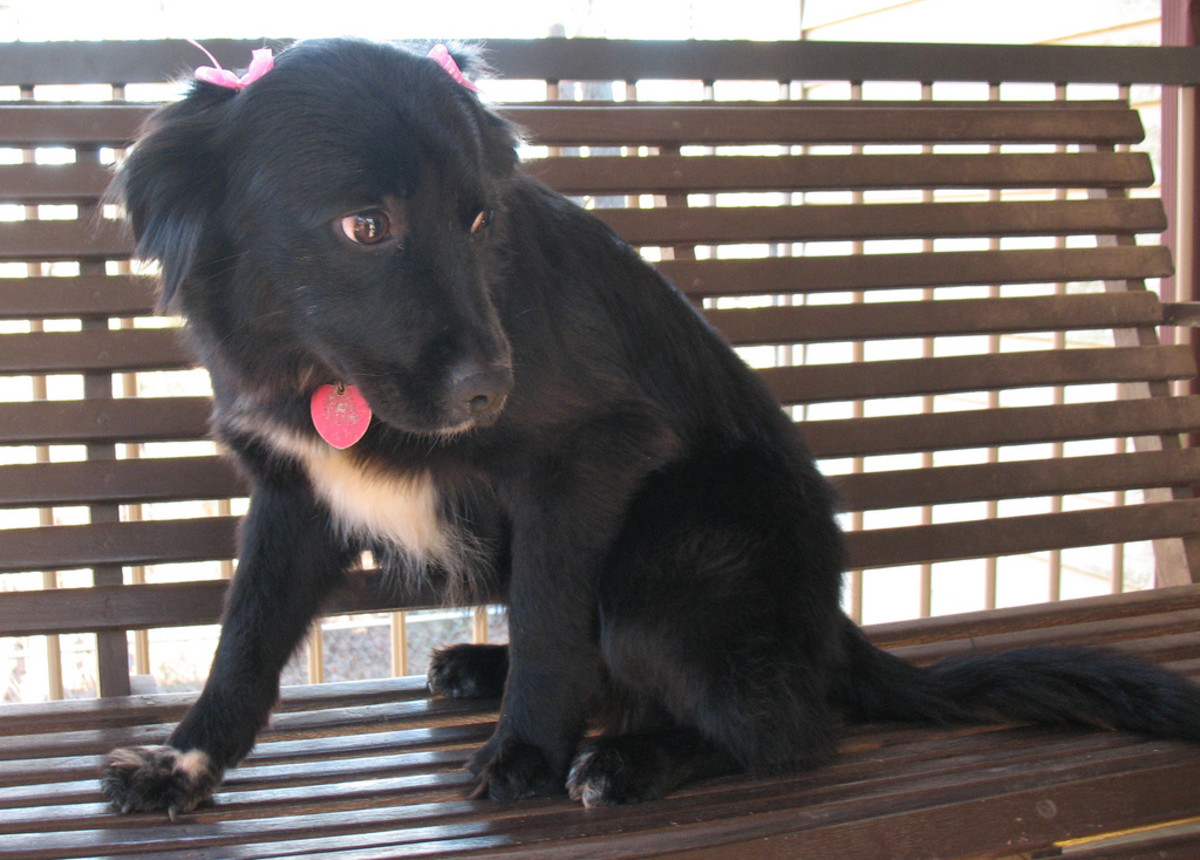 A pretty female dog like this deserves a pretty name. How about Onyx, Jet, or Ebony?