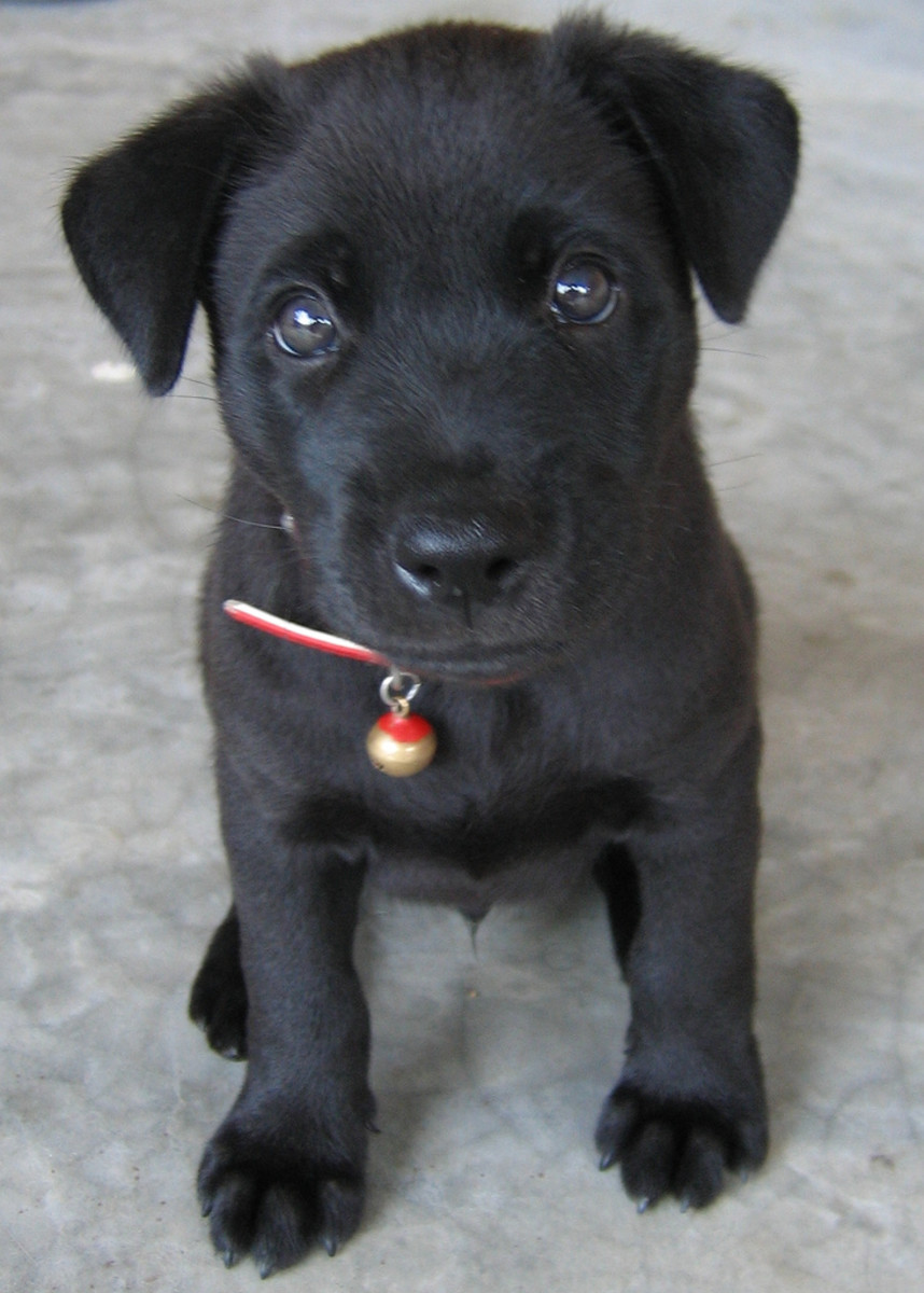 Ideas For Black Dog Names Pethelpful By Fellow Animal Lovers And Experts