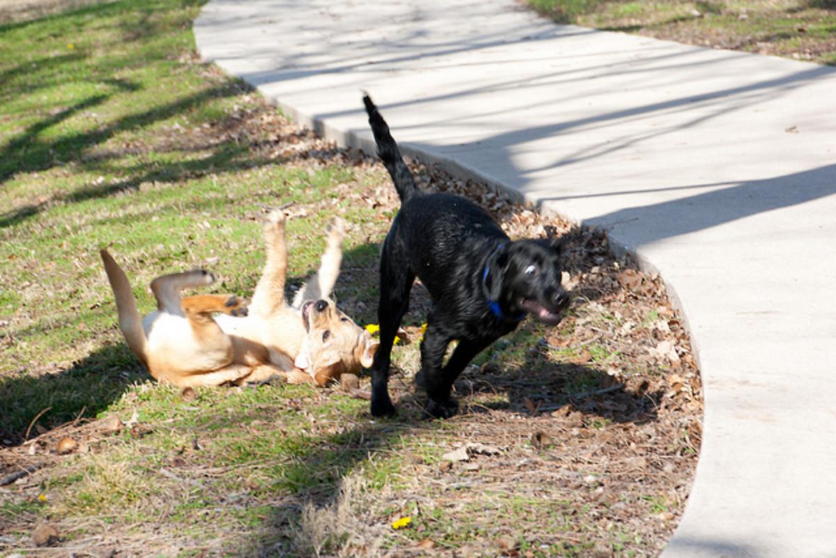 "A puppy on a ""crazy""!"