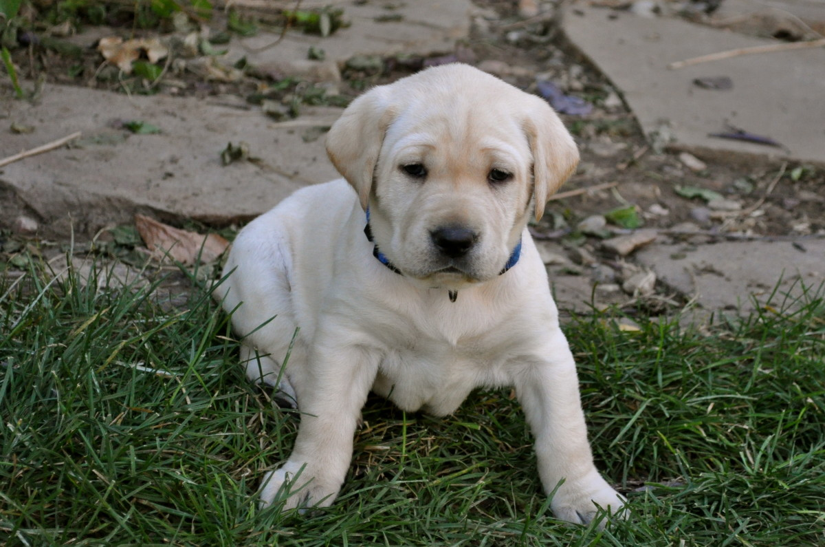 You'll have to come home during lunch for the first few weeks to let your puppy into the garden.