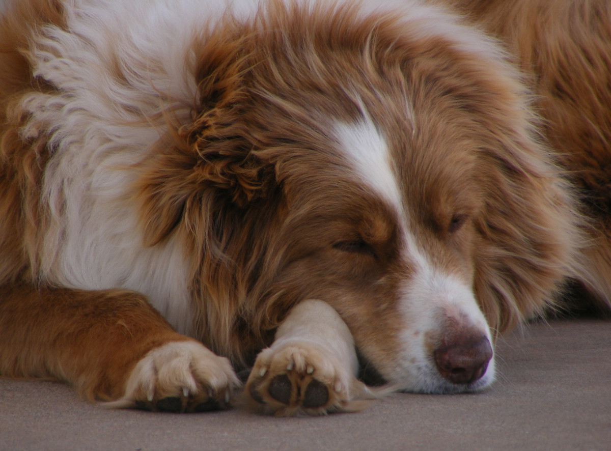 Dogs left alone will often just sleep during the quiet hours.