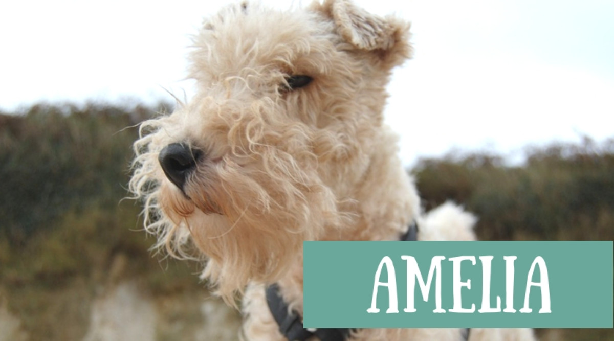 great-names-for-a-wire-fox-terrier