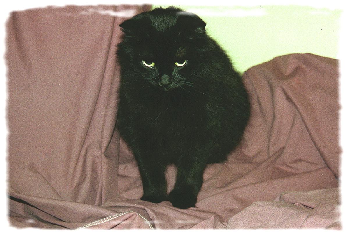 Nicholas was also a rescue cat. I love/have loved all of my cats, but Nicholas was special.