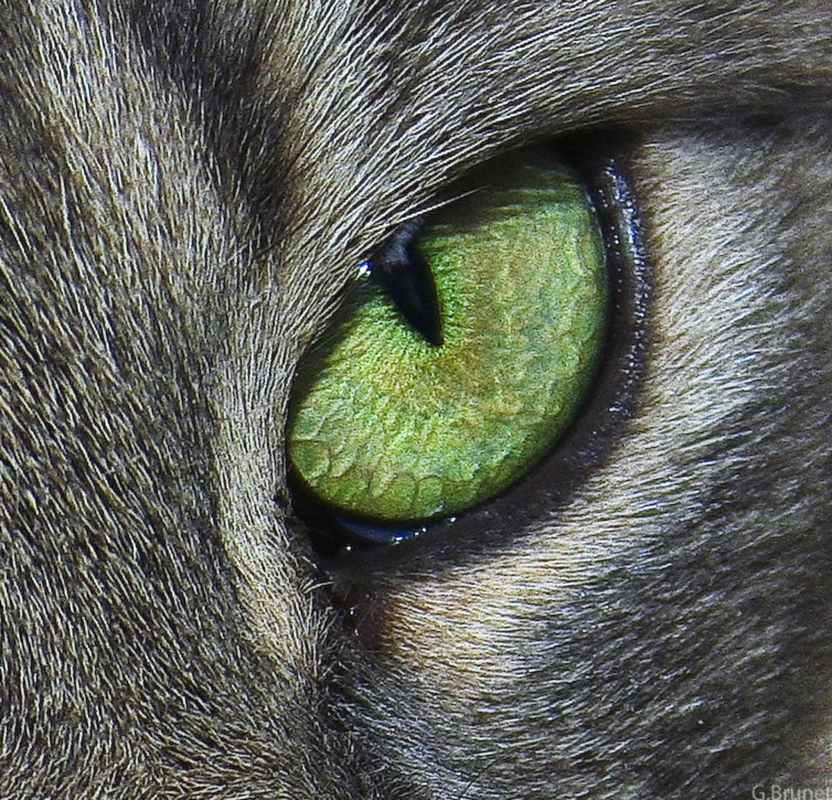 Healthy eyes should match one another in shape, alertness, and width of pupil. If one eye is more closed than another, then most likely it is injured. Also the whites in a cat's eye should be free of yellow or red.