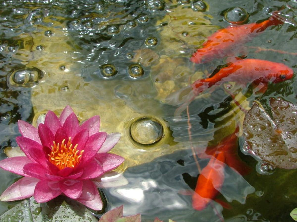 Meet the Goldfishians.