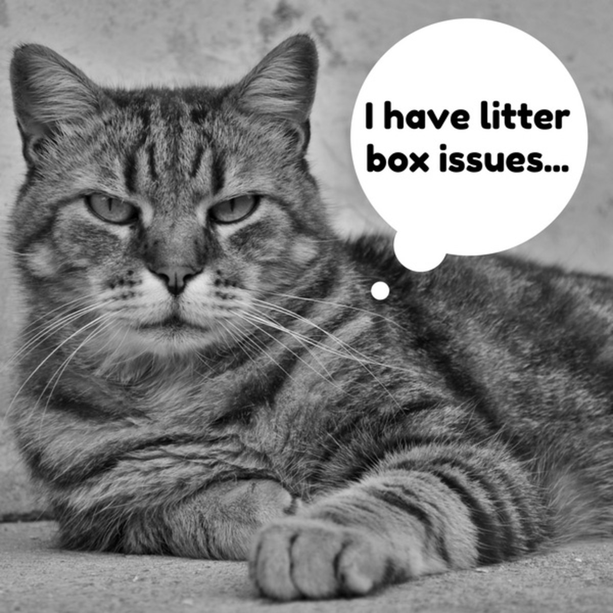 There are a variety of issues that can cause a cat not to use its litter box. Some cats are very picky and making even one small improvement might make a huge difference.