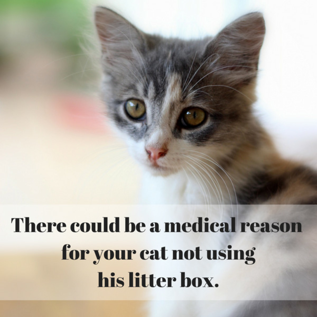cat-not-using-litter-box-try-these-solutions