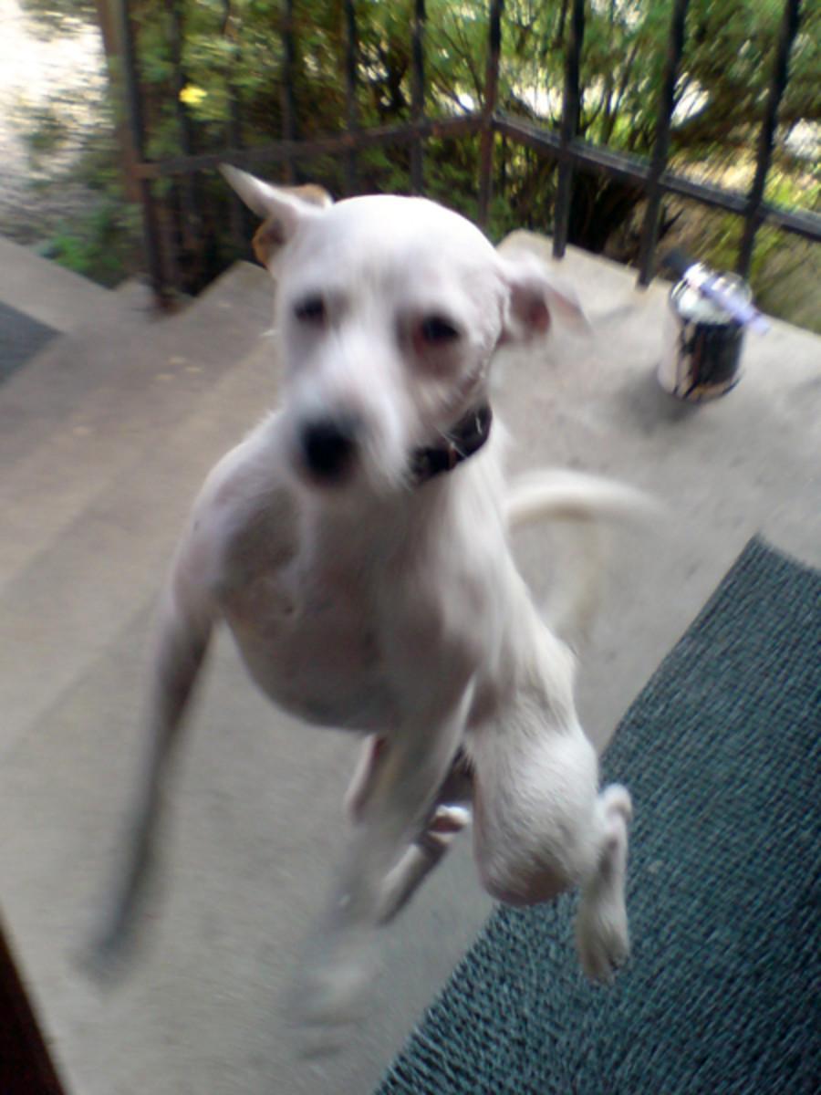 Five Best Active Dog Breeds