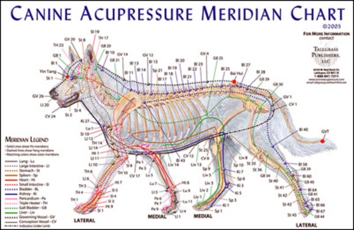 An acupressure chart for dogs.