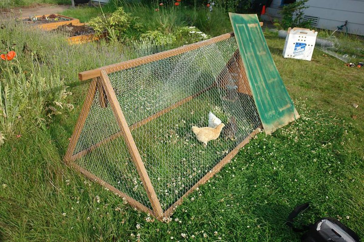 Example of a simple movable chicken tractor