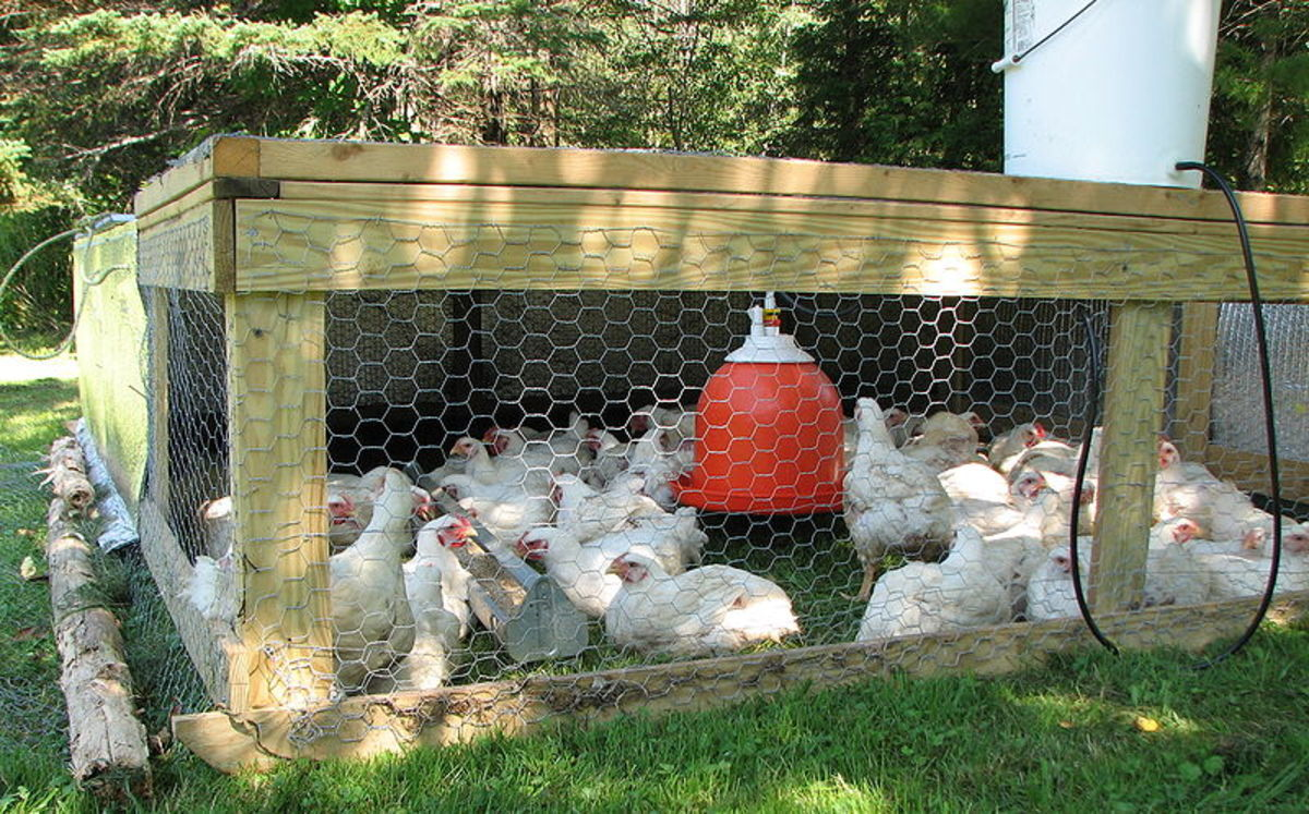 A wood movable chicken coop