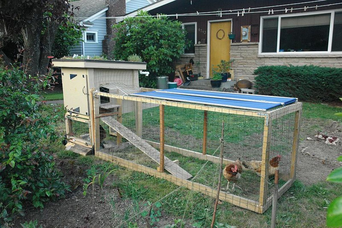 A chicken tractor with a coup attached