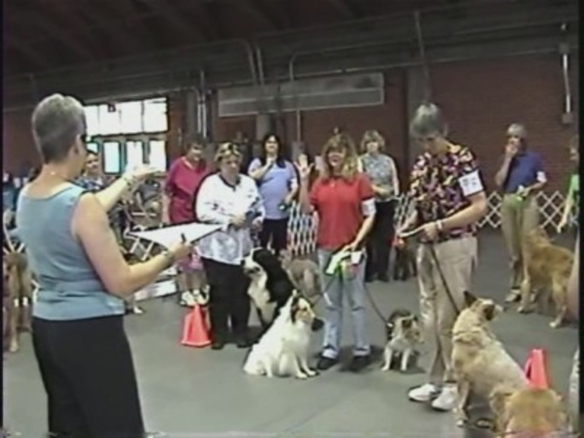 A judge handing out ribbons at a Rally Obedience trial.