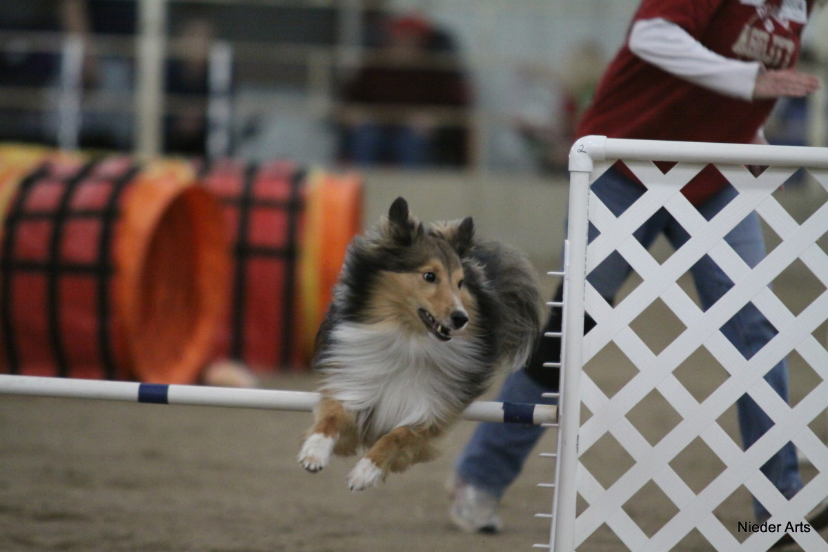 After taking a basic obedience class, you might consider tackling a canine sport like agility.