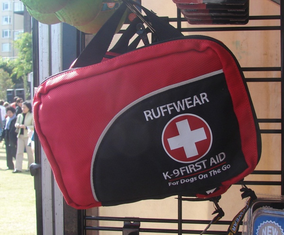 You should have a first aid kit ready for your dog.