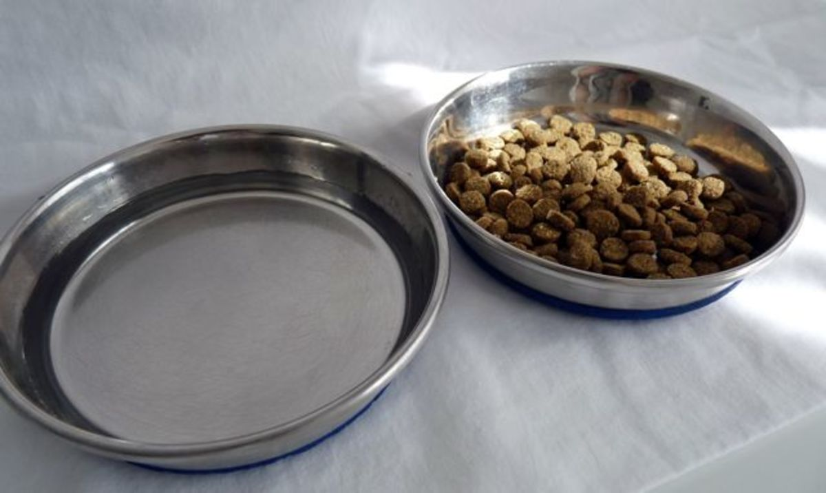 Shallow stainless steel food and water bowls are easy for the cat to eat from and easy to clean with dish soap and water.
