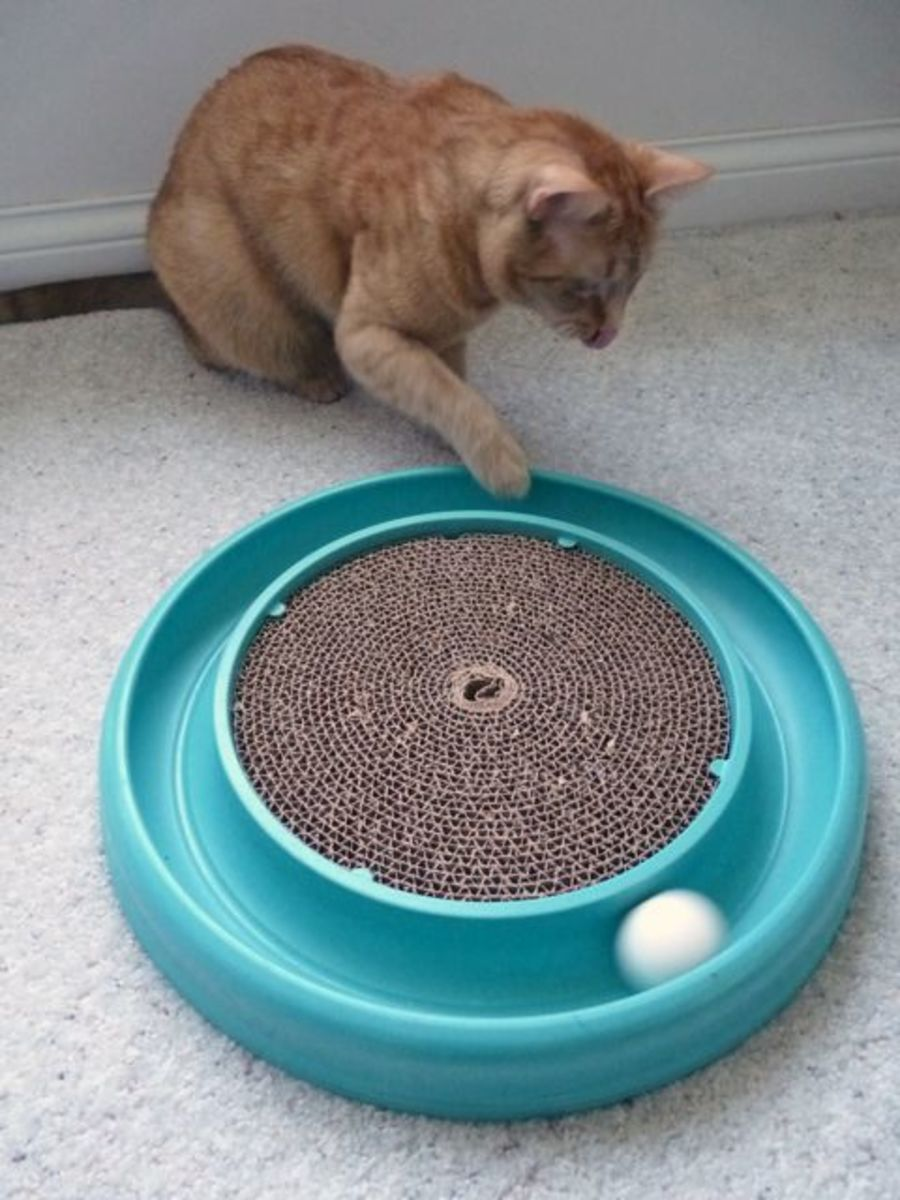 Play helps him burn calories, which is especially important for indoor felines that become less active as they get older.