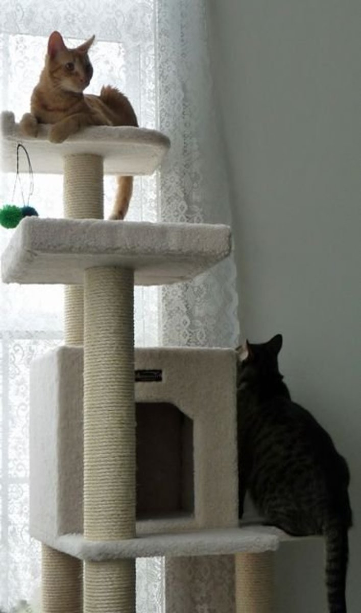 My cats enjoying their cat tree for rest and play.