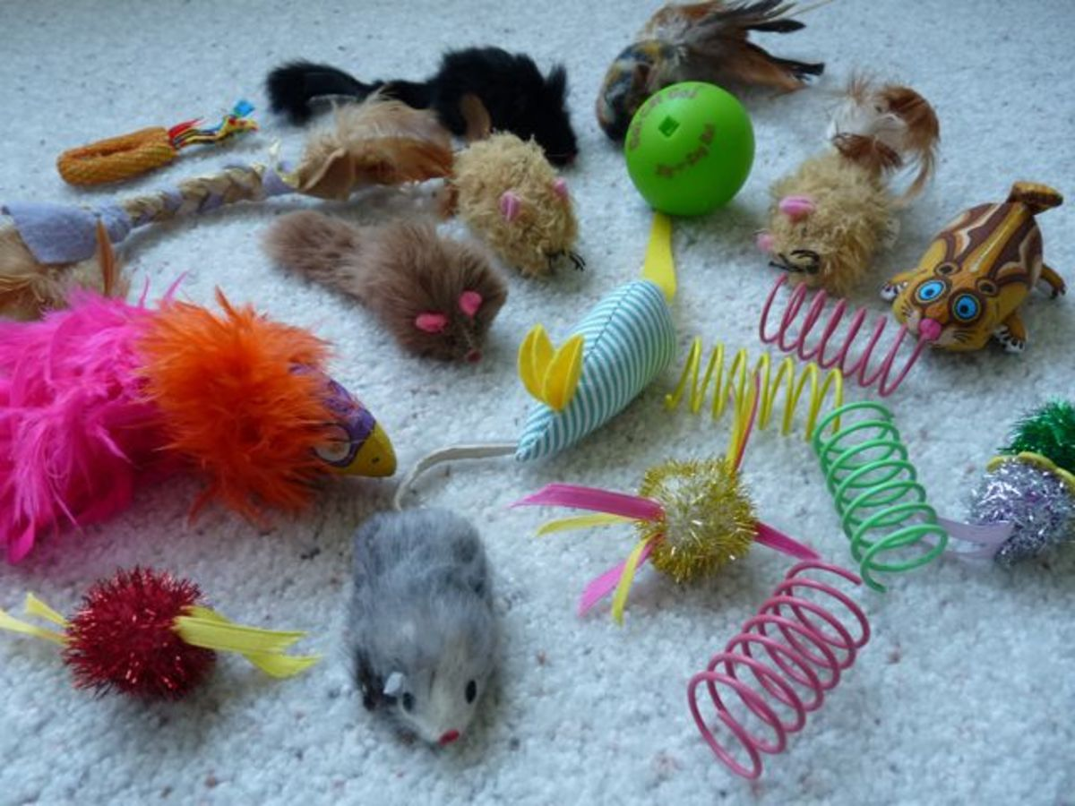 Assortment of fun cat toys
