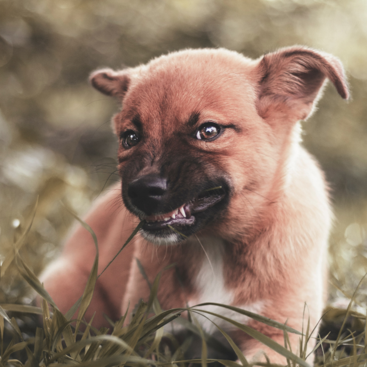 Be sure to take your pup to the vet once their permanent teeth come in to check on their dental health.