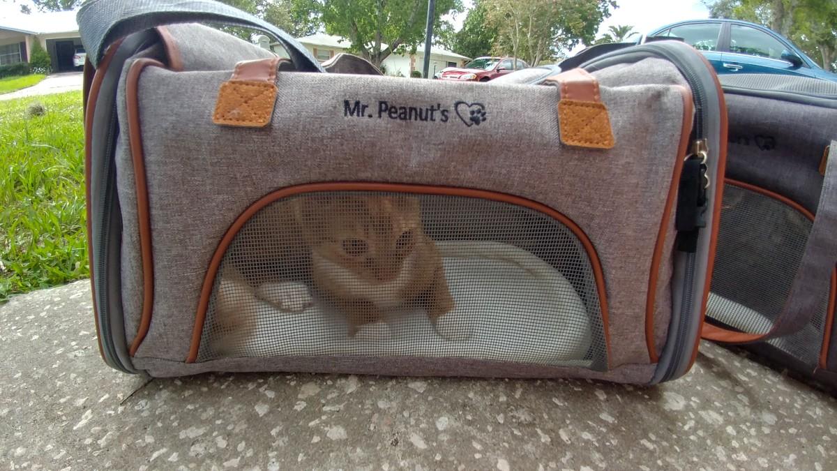A cat enjoying his Mr. Peanuts Low-Profile Tote
