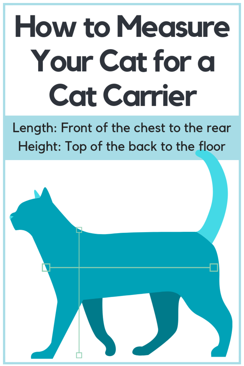 This is how to measure your cat for a cat carrier.