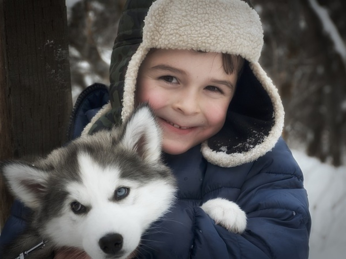 The Siberian Husky will love his owner.