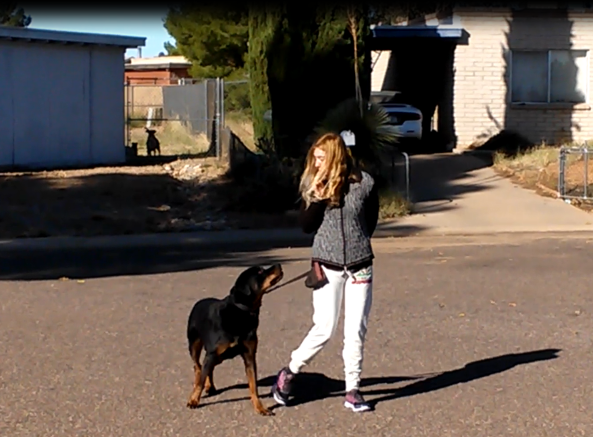 This dog is under threshold and able to learn despite the other dog behind a fence.