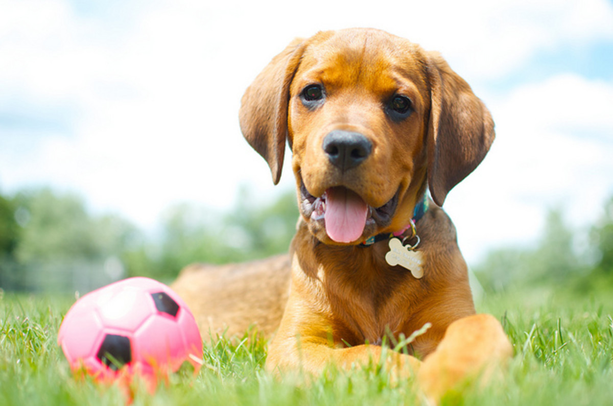 You might find a great mixed breed puppy at your local animal shelter.