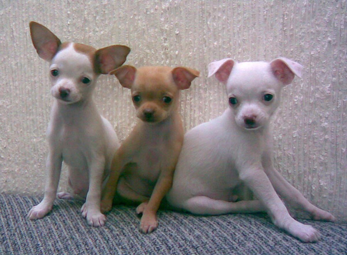 Macho Dog Names