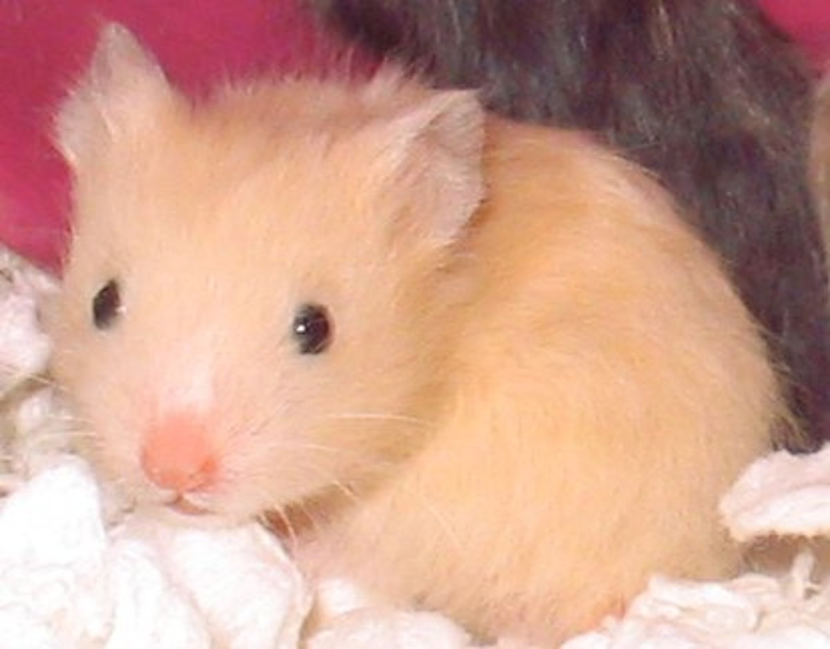 This golden hamster has the cutest quivering whiskers, so I would call him Quiver or Wriggly.