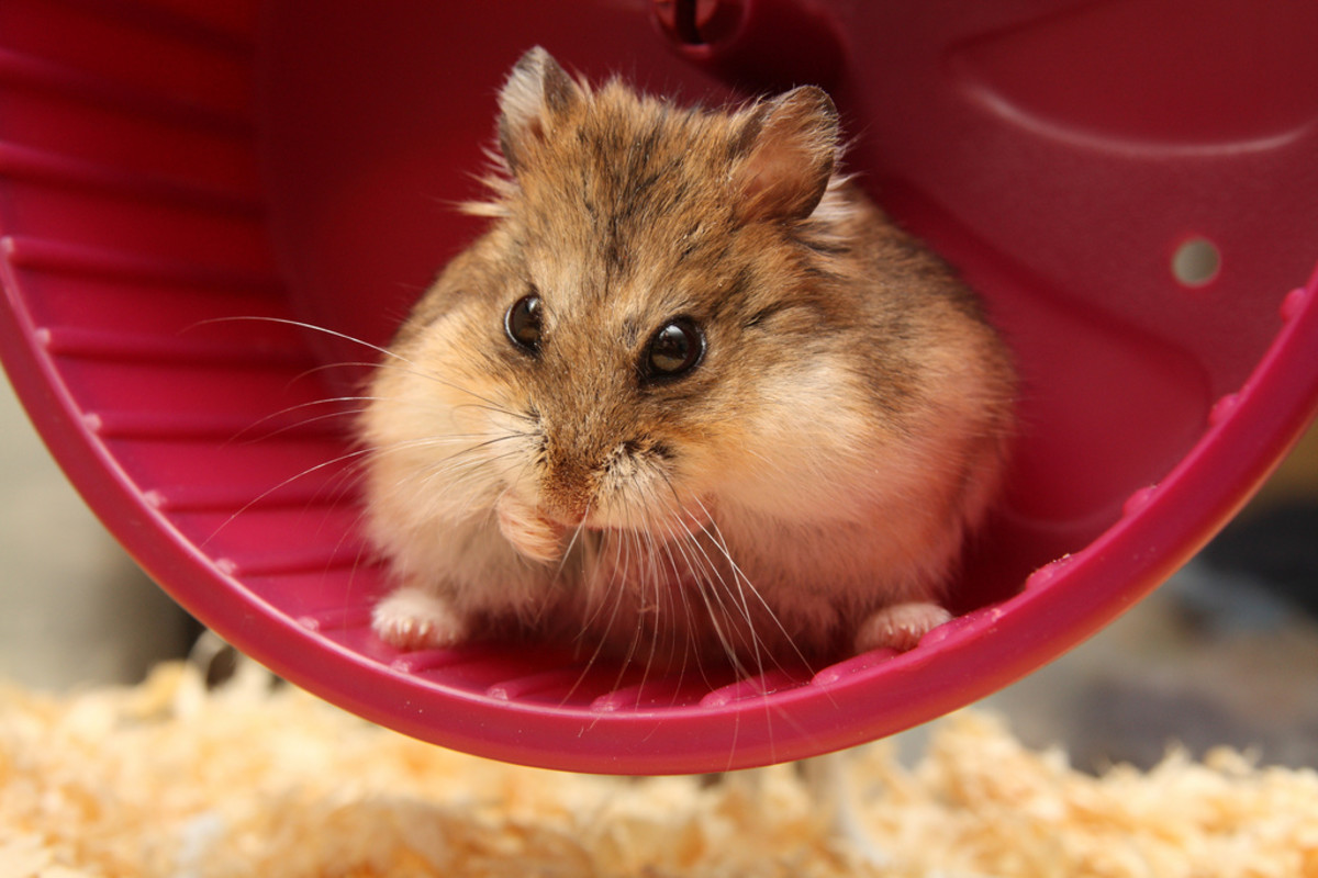 Best Hamster Names | PetHelpful