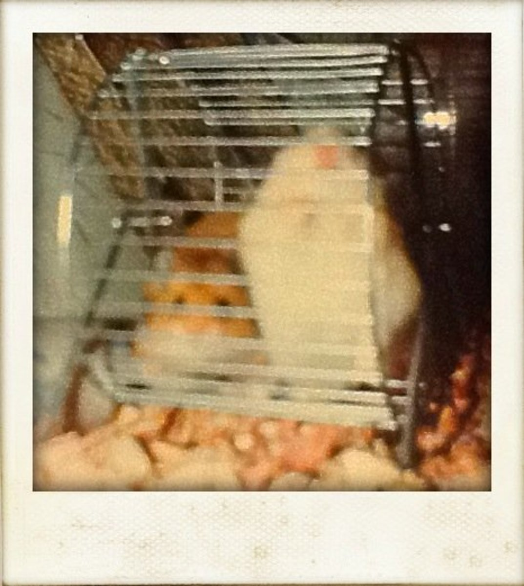 My hamsters Honey and Bunny, circa 1986
