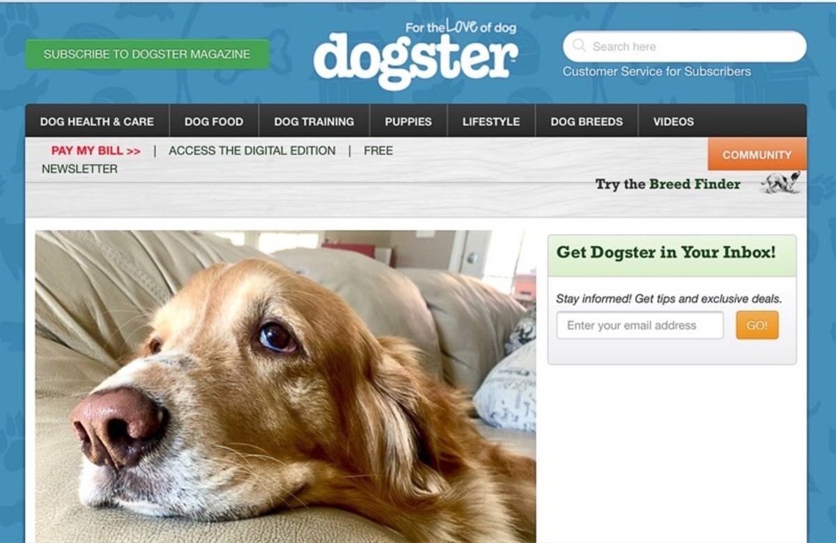 Screenshot of the first half of the Dogster home page