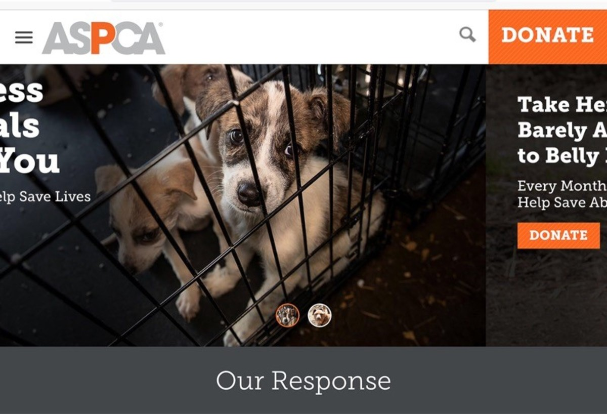 Screenshot of the ASPCA home page